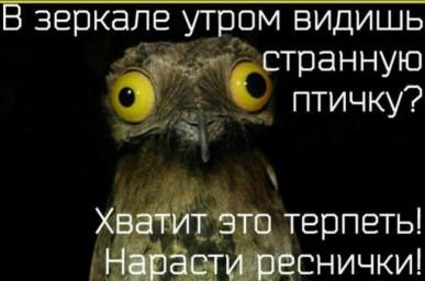 в зеркале видишь странную птичку